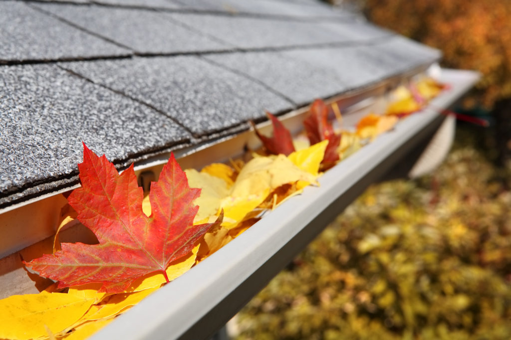 Fall Maintenance Tips for Scotia Homeowners