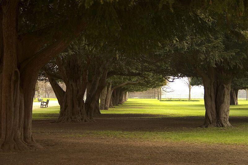 Tree Maintenance Tips